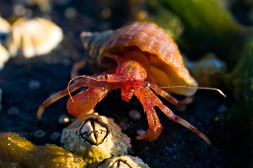 Macro photo of hermit crab and barnacle