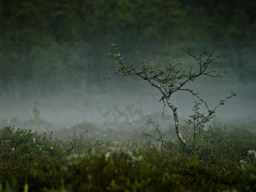 Photo from a marsh filled with mist