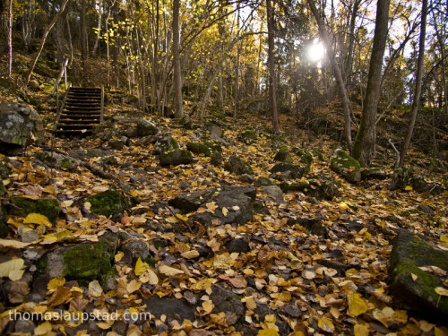 Picture of forest in autumn colors - Ground covered with leaves