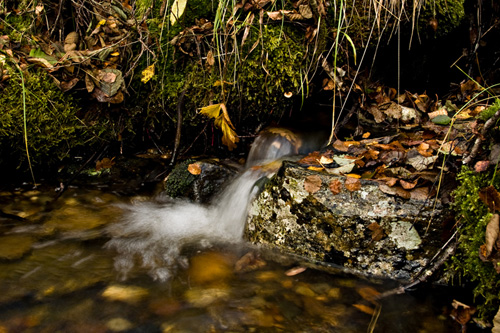 Photo of an autumn stream littered with autumn colored leaves