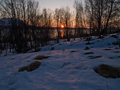 Picture of sunset within a winter forest in Northern Norway