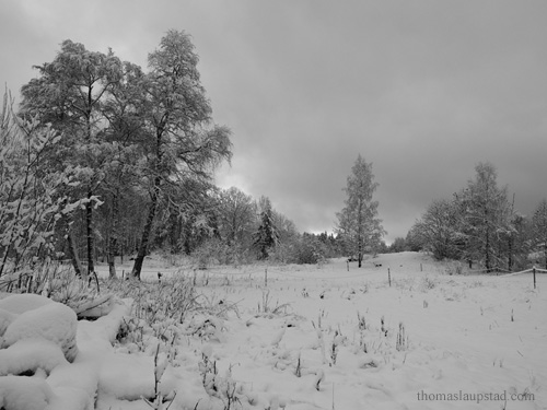 Black and white picture of fresh snow on trees and landscape in Nesodden, Norway