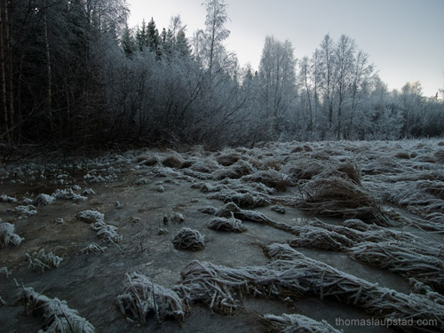 Picture of frozen field and rimed trees - Winter in Southern Norway