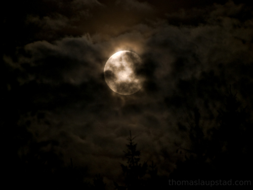 Picture of moon rising over treetops and shining clouds in Southern Norway