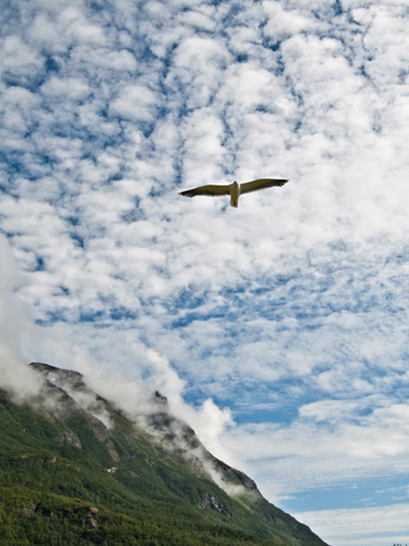 Picture of flying seagull and mountain landscape