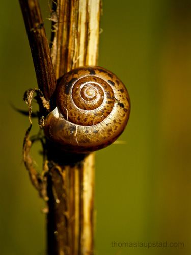 Picture of old snail shell on withered thistle