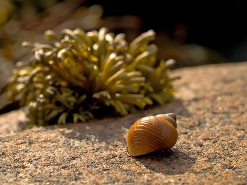 A closer view of a snail