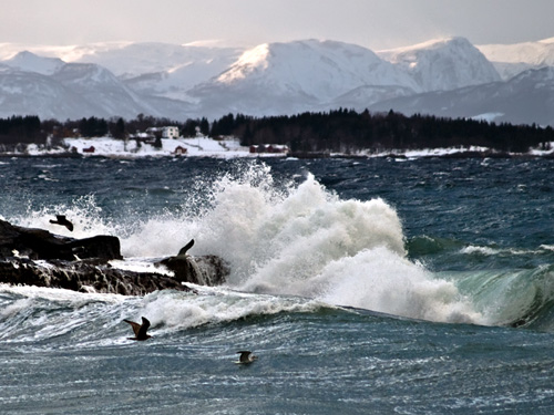 Picture of wave and seagulls sailing on strong wind in Northern Norway