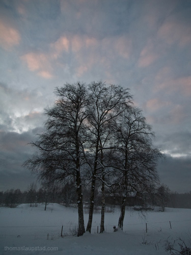 Picture of winter birch trees and evening sky on Nesodden, Norway